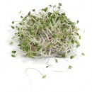 Why You Should (Still!) Eat Raw Sprouts