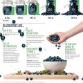 Blueberries_Infographic